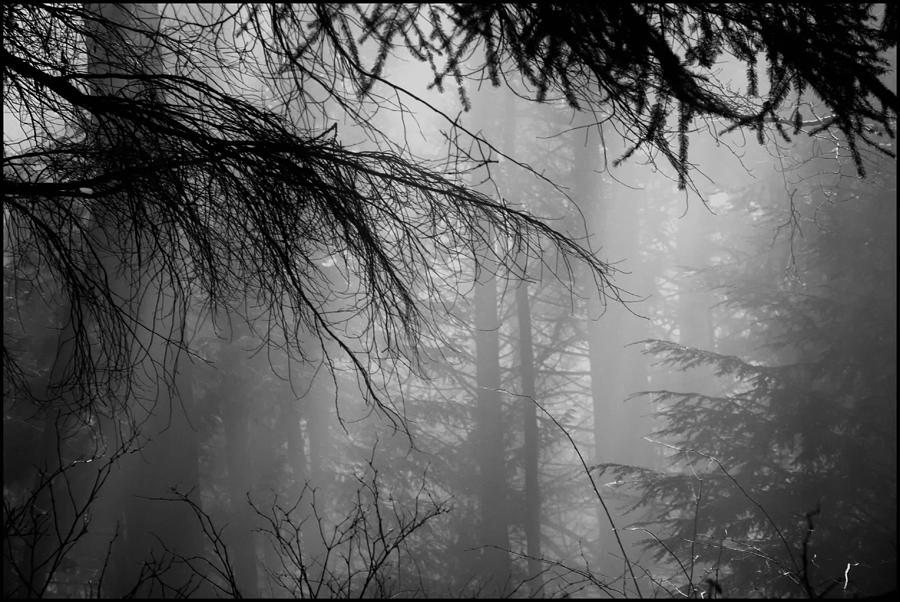 Fog Photograph - Foggy In The Forest by Colin Sands