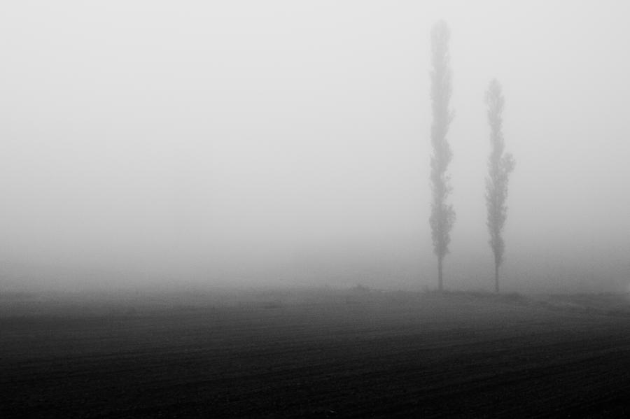 Foggy Landscape Photograph