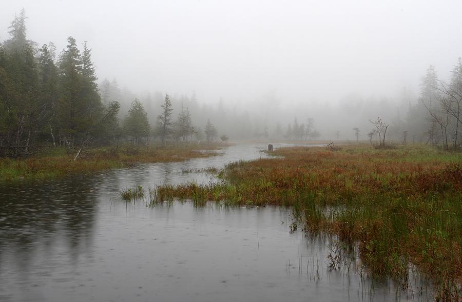 Marsh Photograph - Foggy Marsh Near Jordan Pond by Juergen Roth