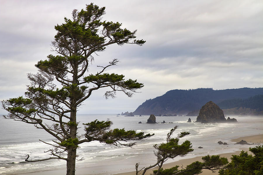 Haystack Rock Photograph - Foggy Morning At Tolovana Beach Oregon by David Gn