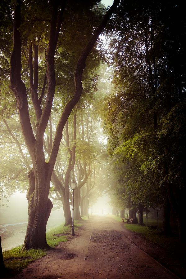 Foggy Photograph - Foggy Morning In The Nesvizh Park by Sviatlana Kandybovich