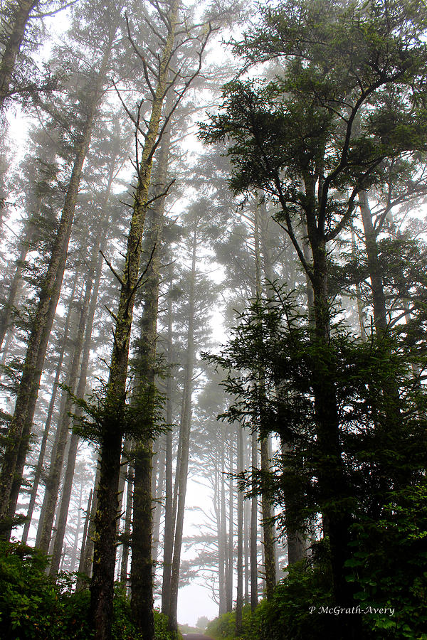 Trees Photograph - Foggy Morning by Pat McGrath Avery