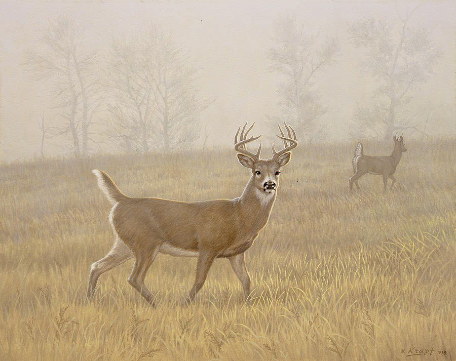 Wildlife Painting - Foggy Morning-whitetail by Paul Krapf