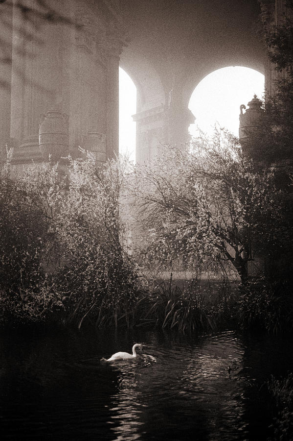 San Francisco Photograph - Foggy Palace 1 by SFPhotoStore