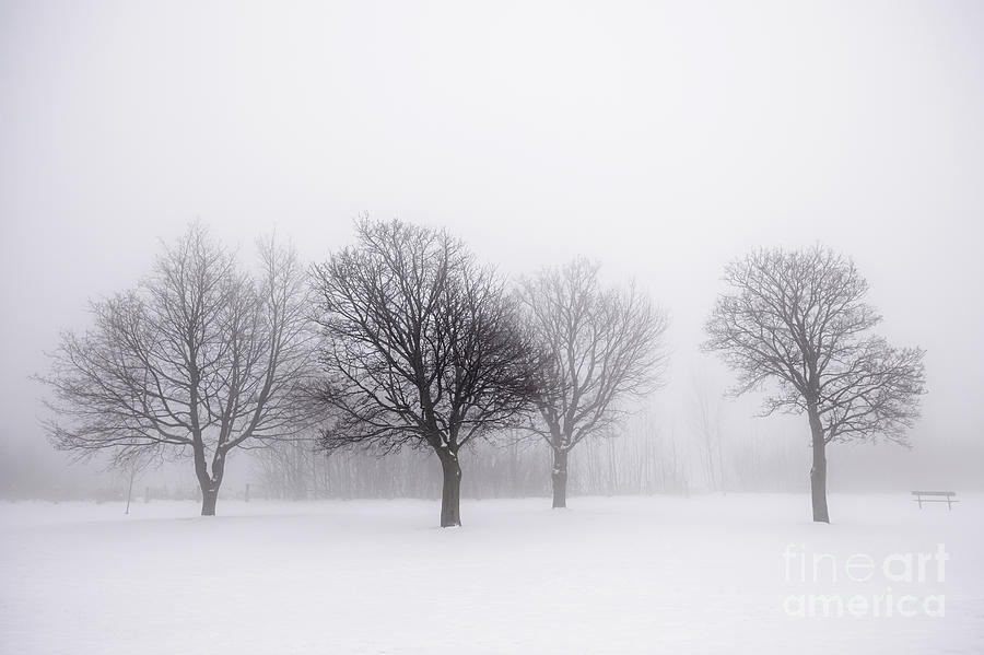 Foggy Park With Winter Trees Photograph By Elena Elisseeva