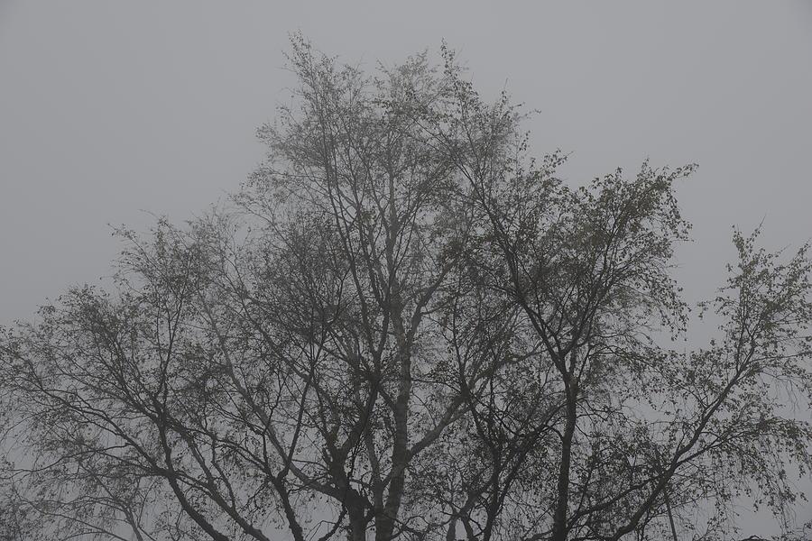 Fine Photograph - Foggy Romance 4 by Teo SITCHET-KANDA