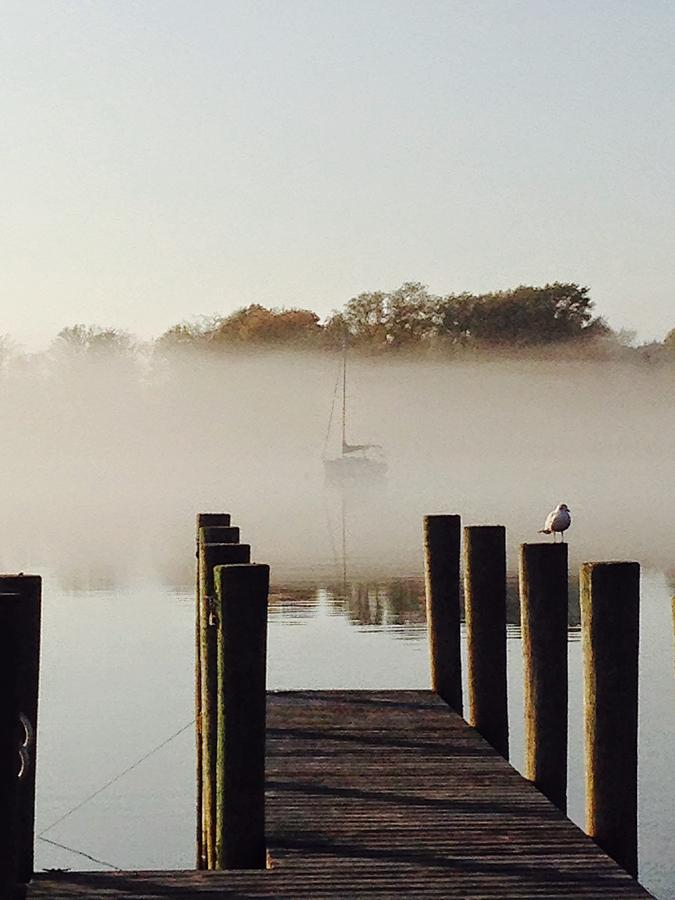 Sag Harbor House By P T Interiors With Images: Foggy Sag Harbor Dock And Gull Photograph By Michael Daly