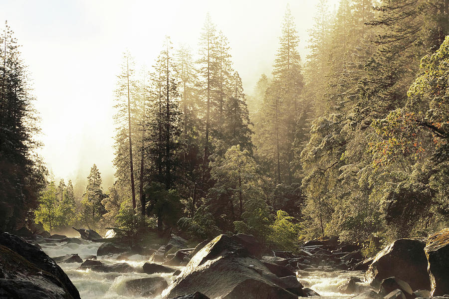 Foggy Sky Over Spring Creek In Yosemite Photograph by Arturbo