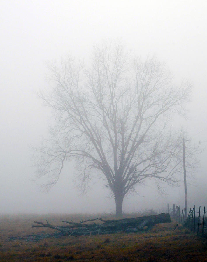 Tree Photograph - Foggy Sunday II by Leon Hollins III