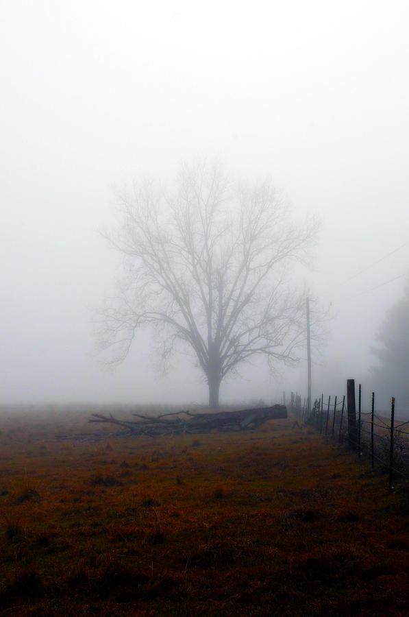 Trees Photograph - Foggy Sunday by Leon Hollins III