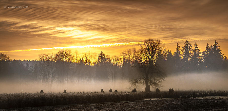Landscape Photograph - Foggy Sunrise by Cassius Johnson