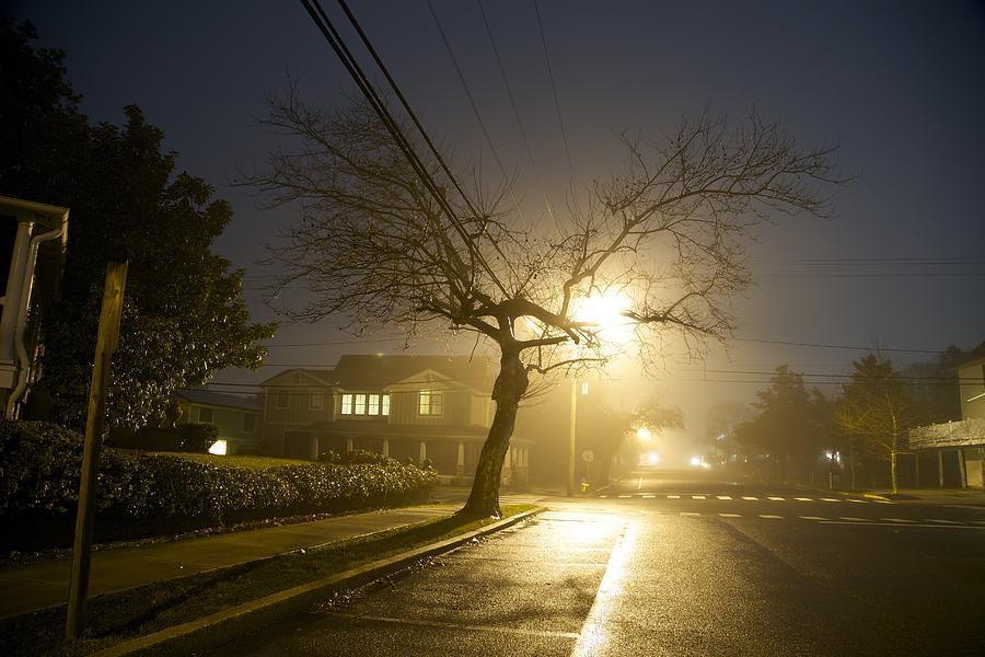 Tree Photograph - Foggy Tree by Beau Finley
