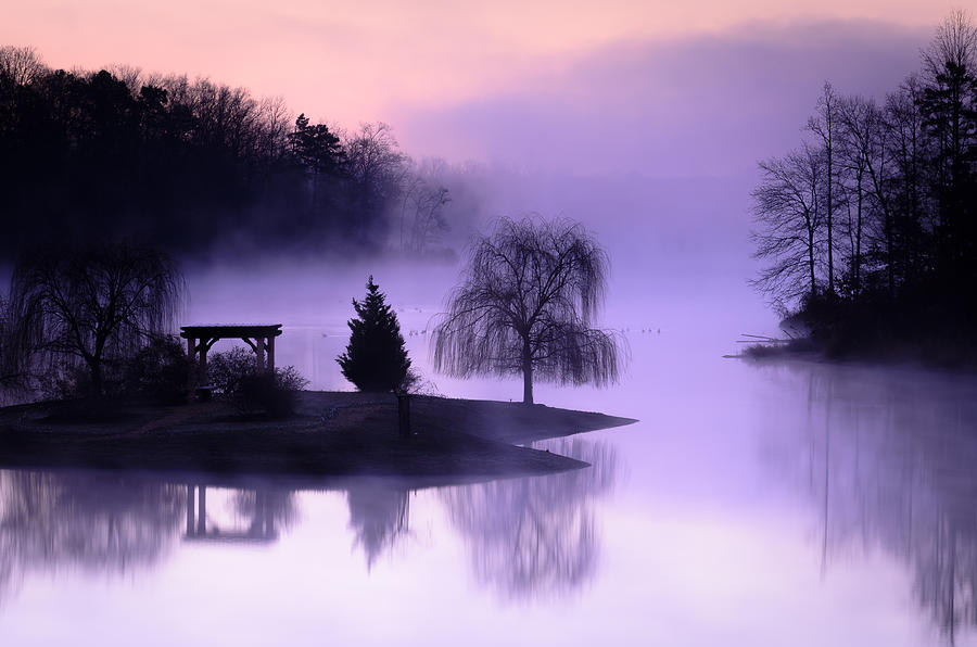 Evergreen Tree Photograph - Foggy Twilight by Thomas Pettengill