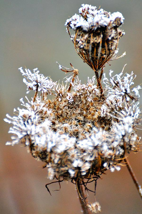 Foggy Weeds 20663 Photograph