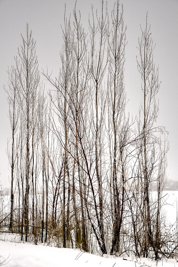 Foggy Winter Tree Fence 13271 Photograph