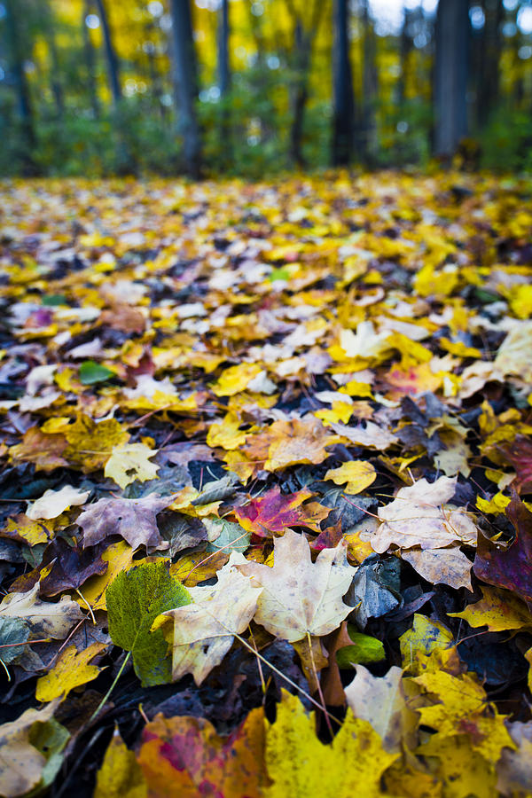 Foliage by Sebastian Musial