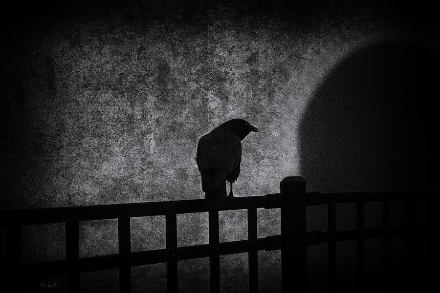 Crow Photograph - Follow by Bob Orsillo