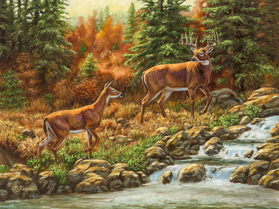 Deer Painting - Whitetail Deer - Follow Me by Crista Forest
