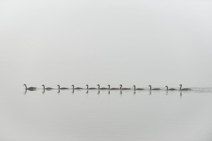 Geese Photograph - Follow Me by Nick Kalathas