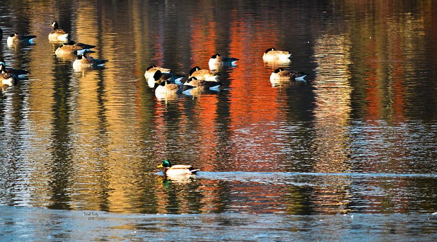 Pond Photograph - Follow Me by Trish Tritz