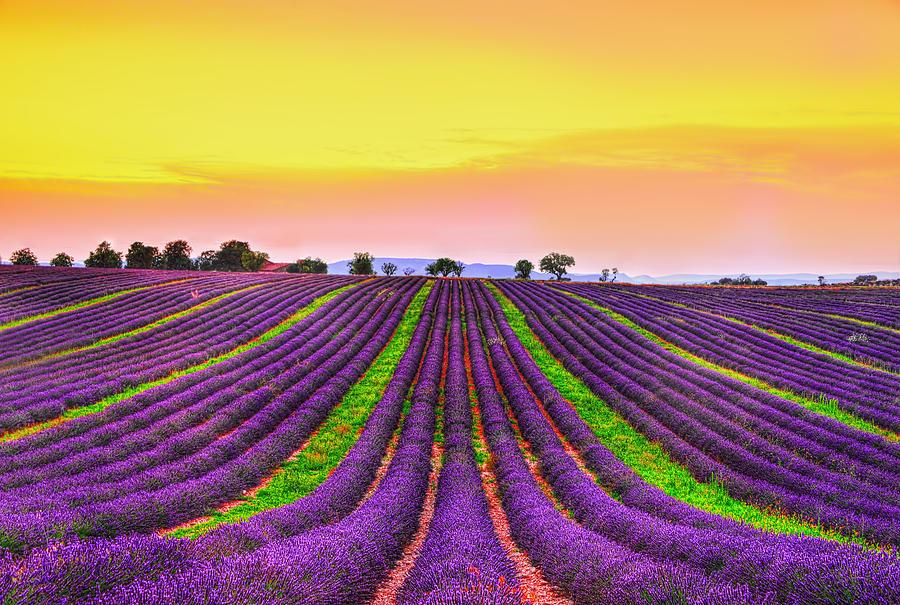Provence Photograph - Follow My Dreams by Midori Chan