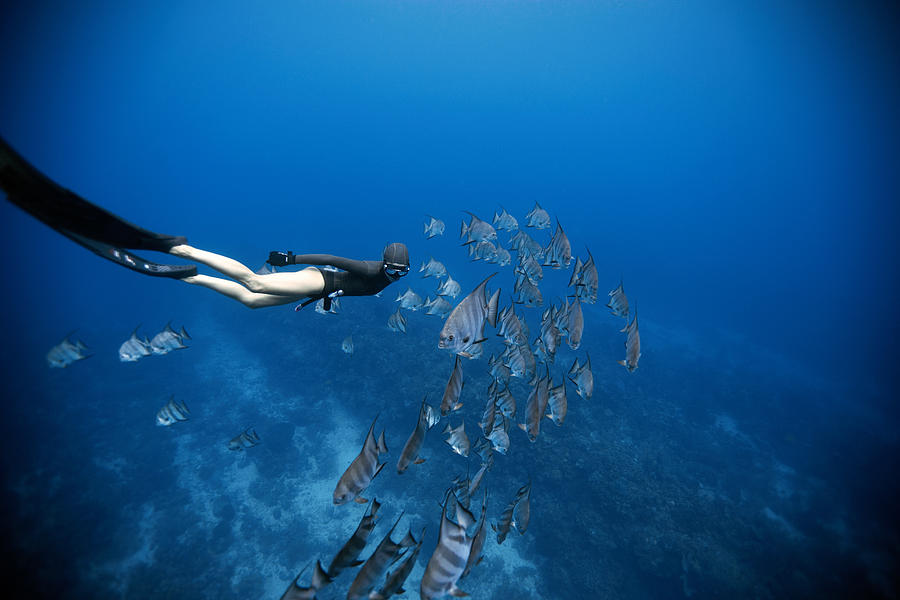 Freediving Photograph - Follow The Fish by One ocean One breath