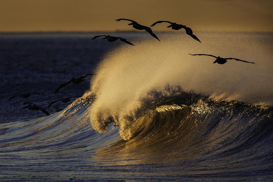 Birds Photograph - Follow The Leader 73A2324 by David Orias