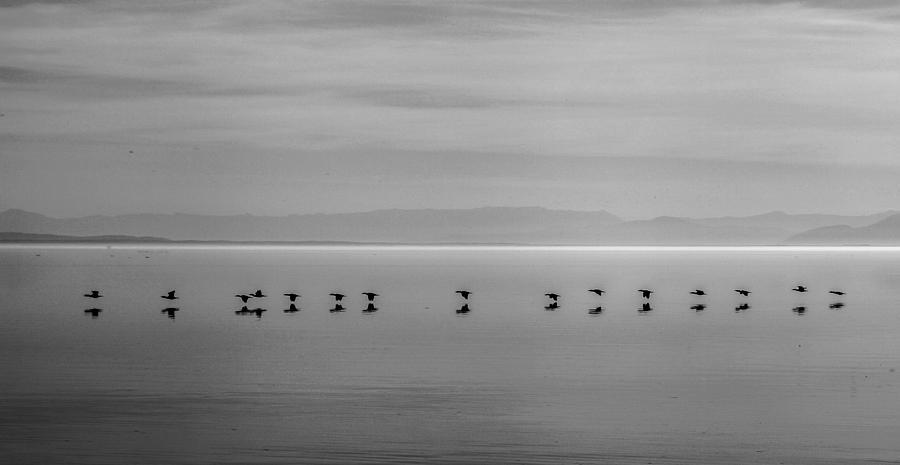 Salton Sea Photograph - Follow The Leader by Robert  Aycock