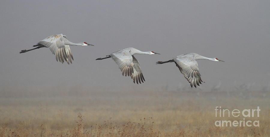 Crane Photograph - Follow The Leader by Ruth Jolly