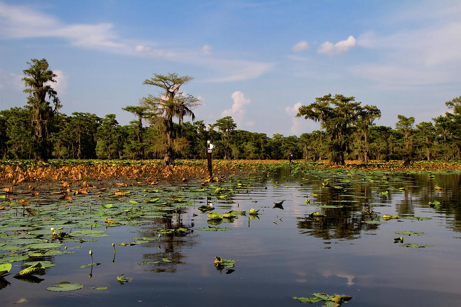Bayou Photograph - Follow The Markers by Lana Trussell
