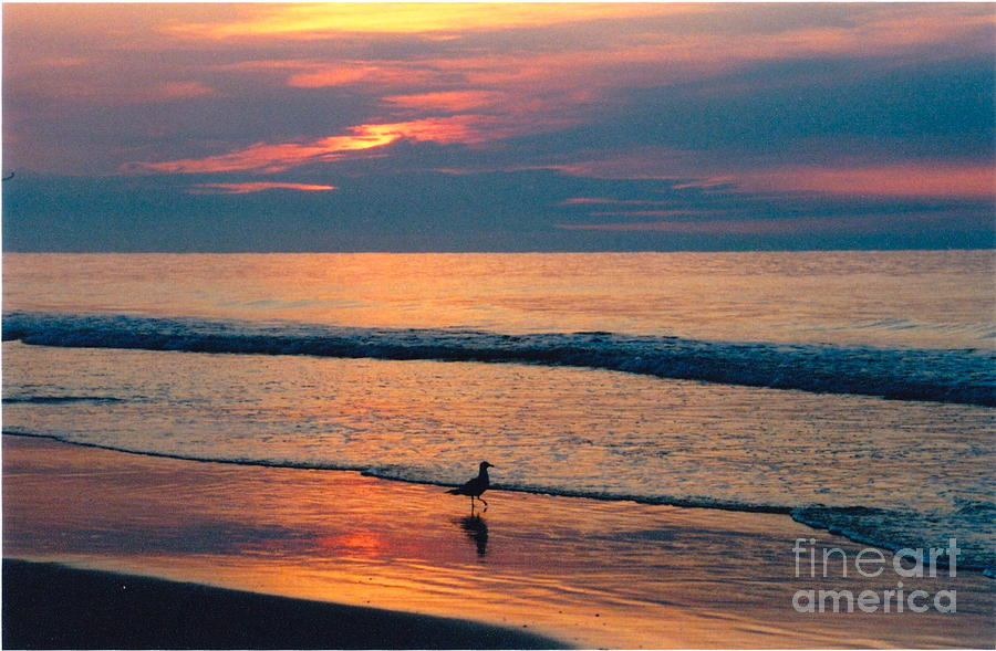 Beach Photograph - Following The Tide by Debbie Bailey