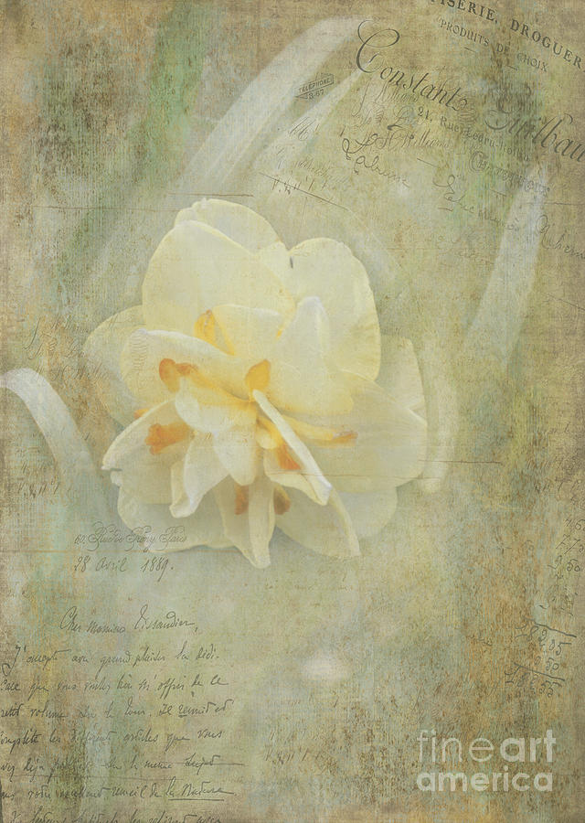 Flower Photograph - Fond Memory by Arlene Carmel