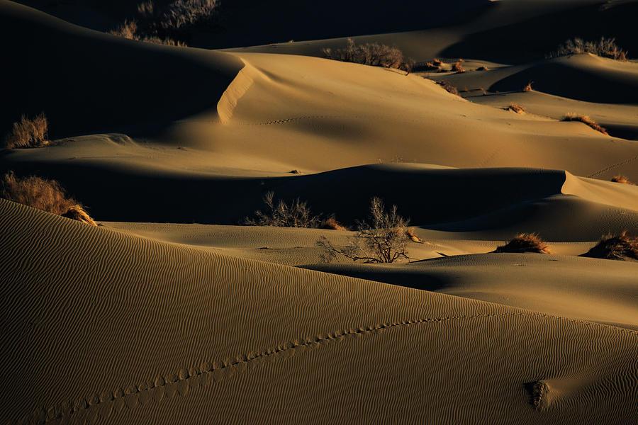 Desert Photograph - Footprints by Babak Mehrafshar (bob)