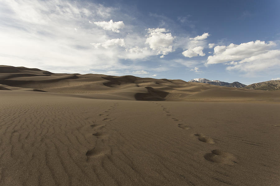 Landscapes Photograph - Footprints In The Sand by Amber Kresge
