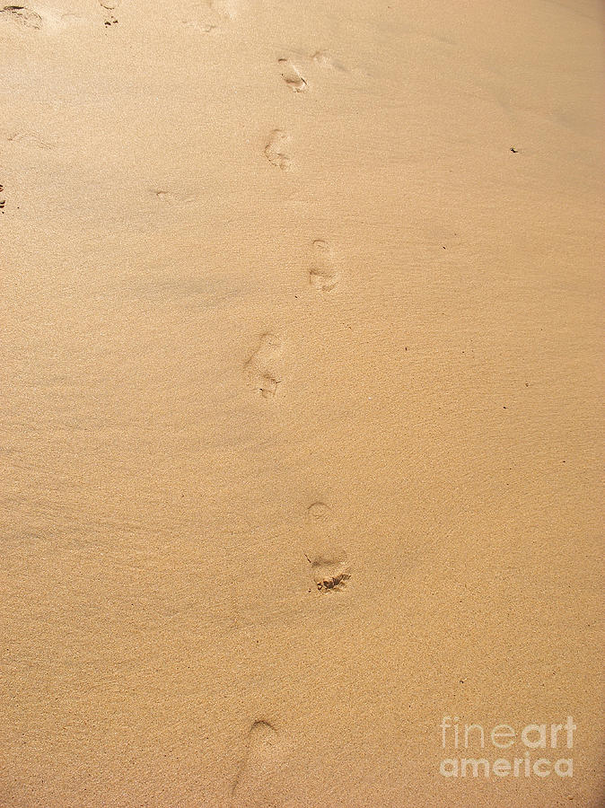 Footprints Photograph - Footprints In The Sand by Pixel  Chimp