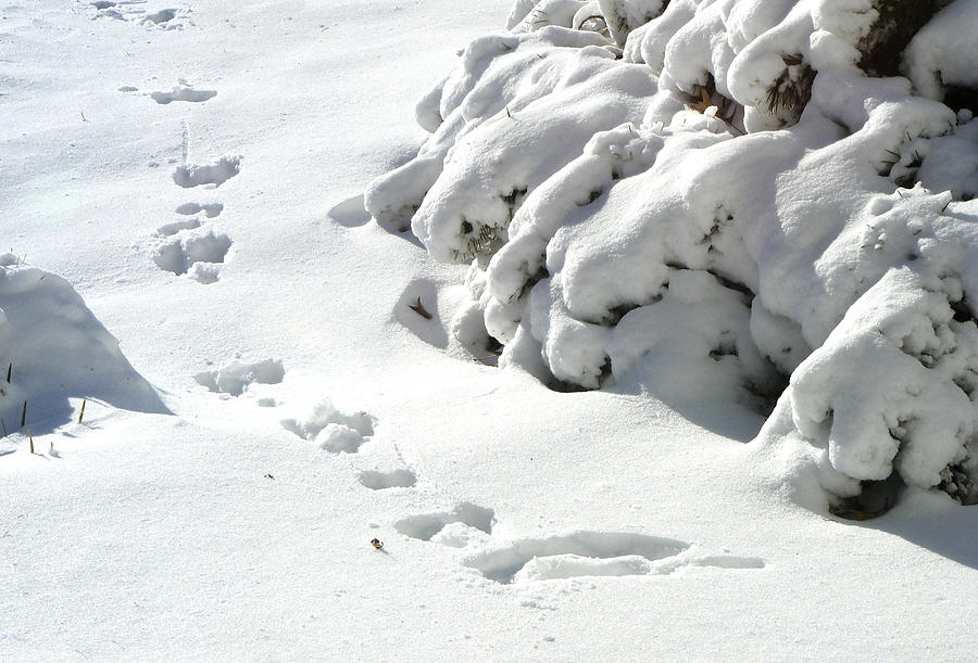 Snow Photograph - footprints in the Snow by Rachel Christine Nowicki
