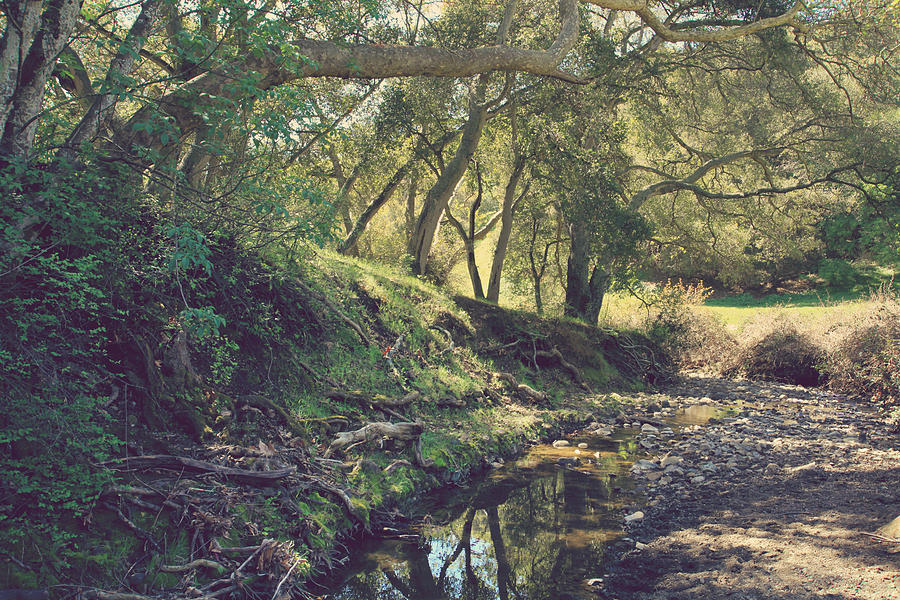 Dry Creek Pioneer Regional Park Photograph - For A Time You Were Mine by Laurie Search