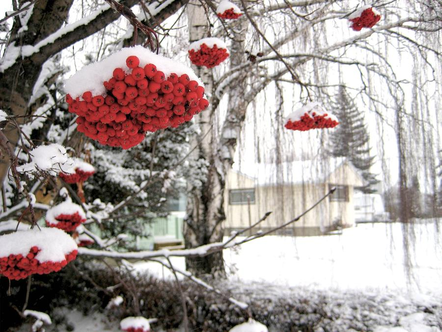 Seasons Photograph - For The Birds by Shirley Sirois