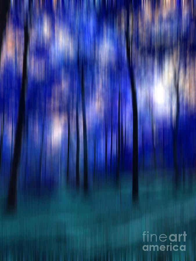 Abstract Photograph - Forest Abstract 2 by Angela Bruno