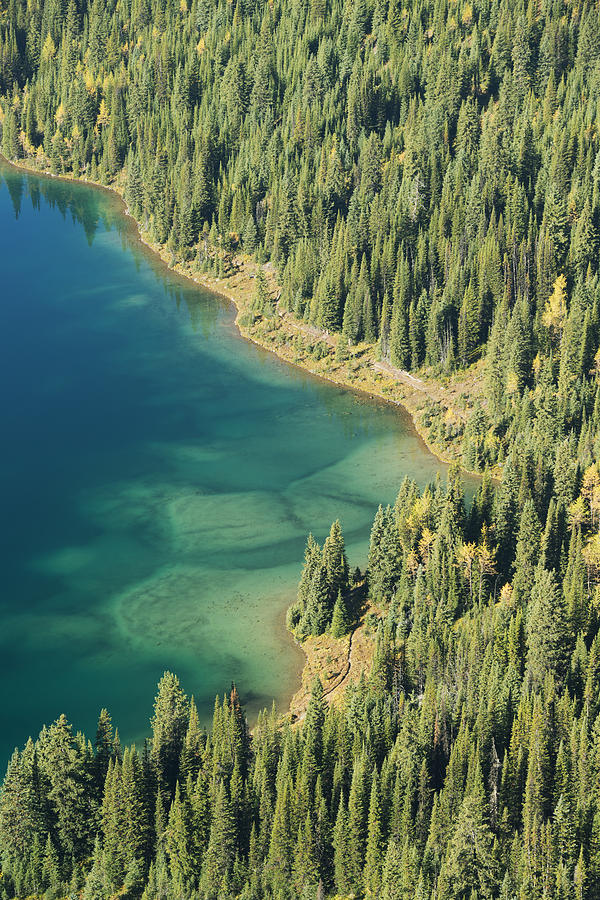 Forest And Cerulean Lake At Mt Photograph by Kevin Schafer