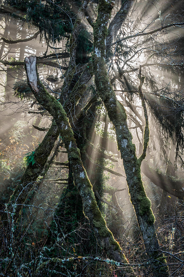 Forest Photograph - Forest Beams by Mike  Walker