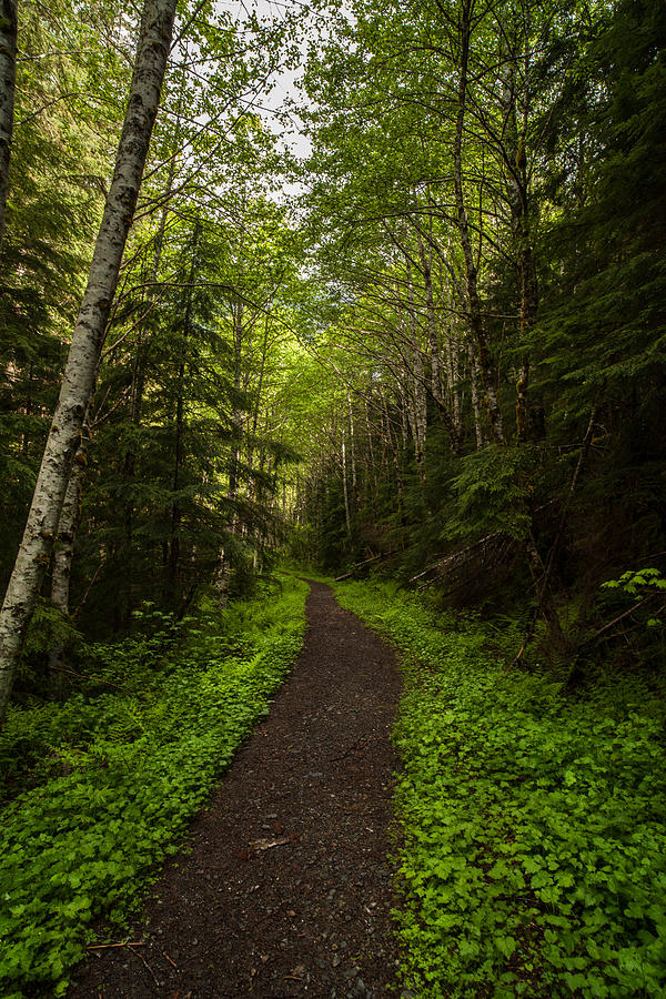 Forest Beckons Photograph By Mike Reid