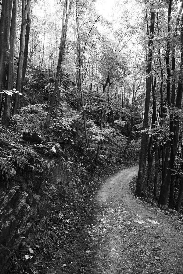 Wald Photograph - Forest Black And White 12 by Falko Follert