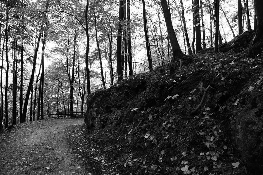 Wald Photograph - Forest Black And White 5 by Falko Follert