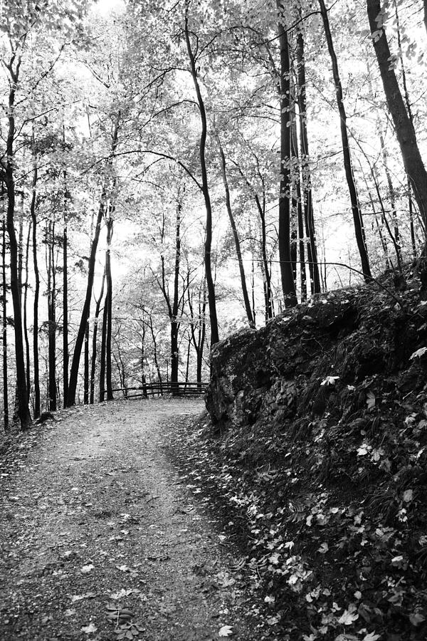 Wald Photograph - Forest Black And White 6 by Falko Follert