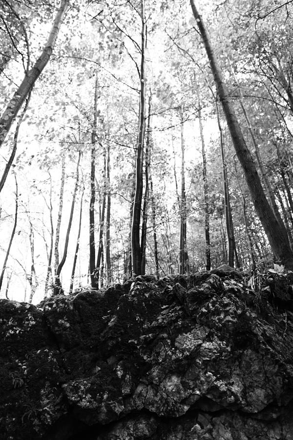 Wald Photograph - Forest Black And White 7 by Falko Follert
