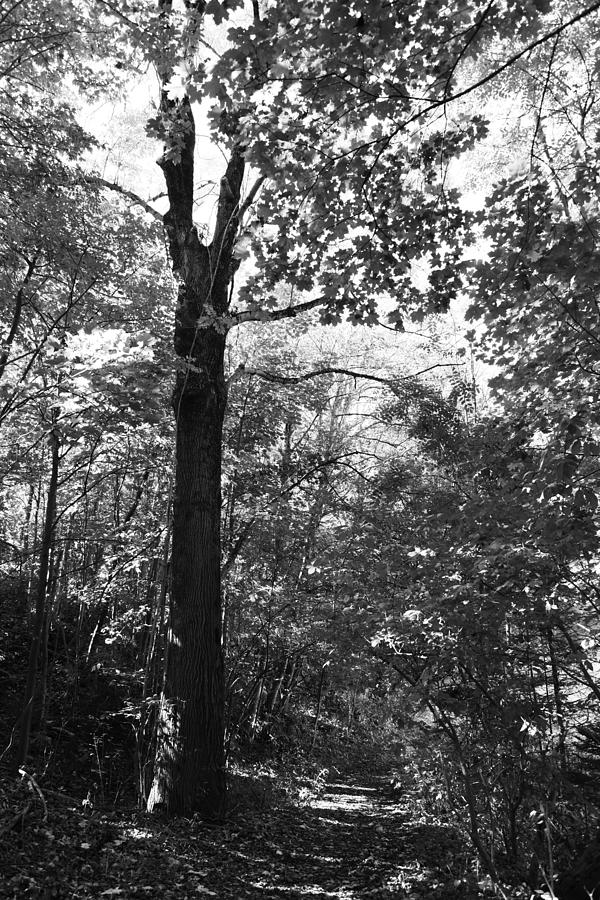Wald Photograph - Forest Black And White by Falko Follert