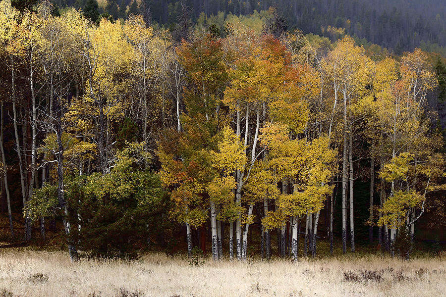 Forest Photograph - Forest Colors by Lynn Sprowl