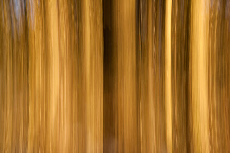Abstract Forest Photograph