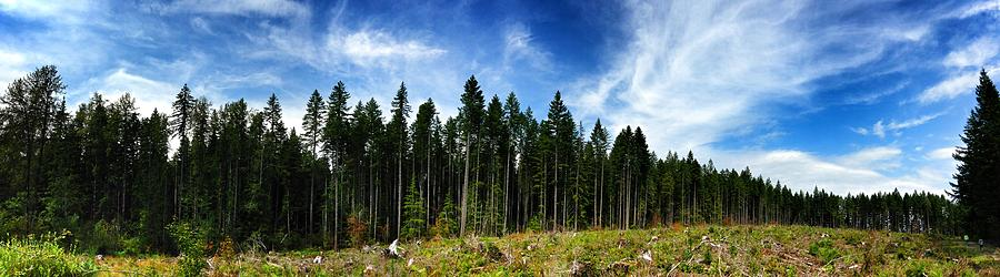 Forest Photograph - Forest Edge by Jeff Klingler